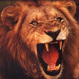 roaringlion.jpg